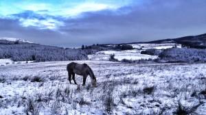 12452306005_a48819b00e_k horse in snow